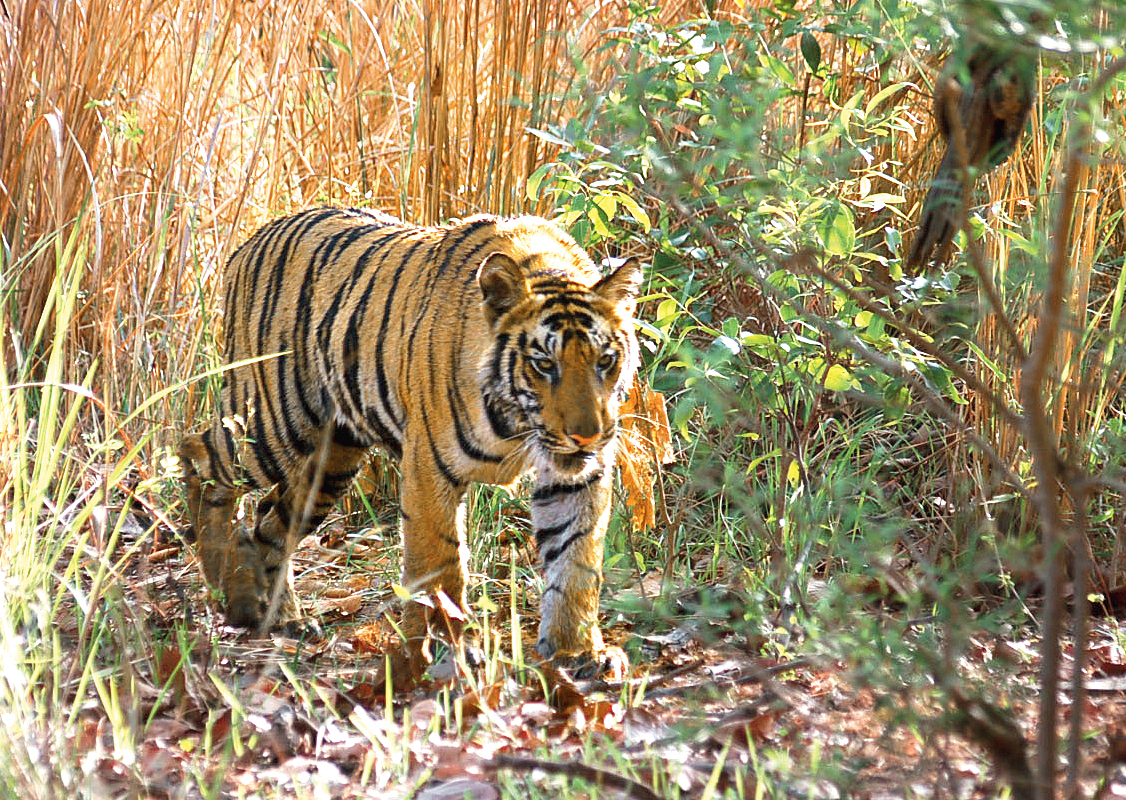 The unwillingness to invest in proper environmental conservation among top politicians and bureaucrats, together with the lack of awareness and sensitivity among ordinary citizens, is at the root of the mismanagement of conservation initiatives in India