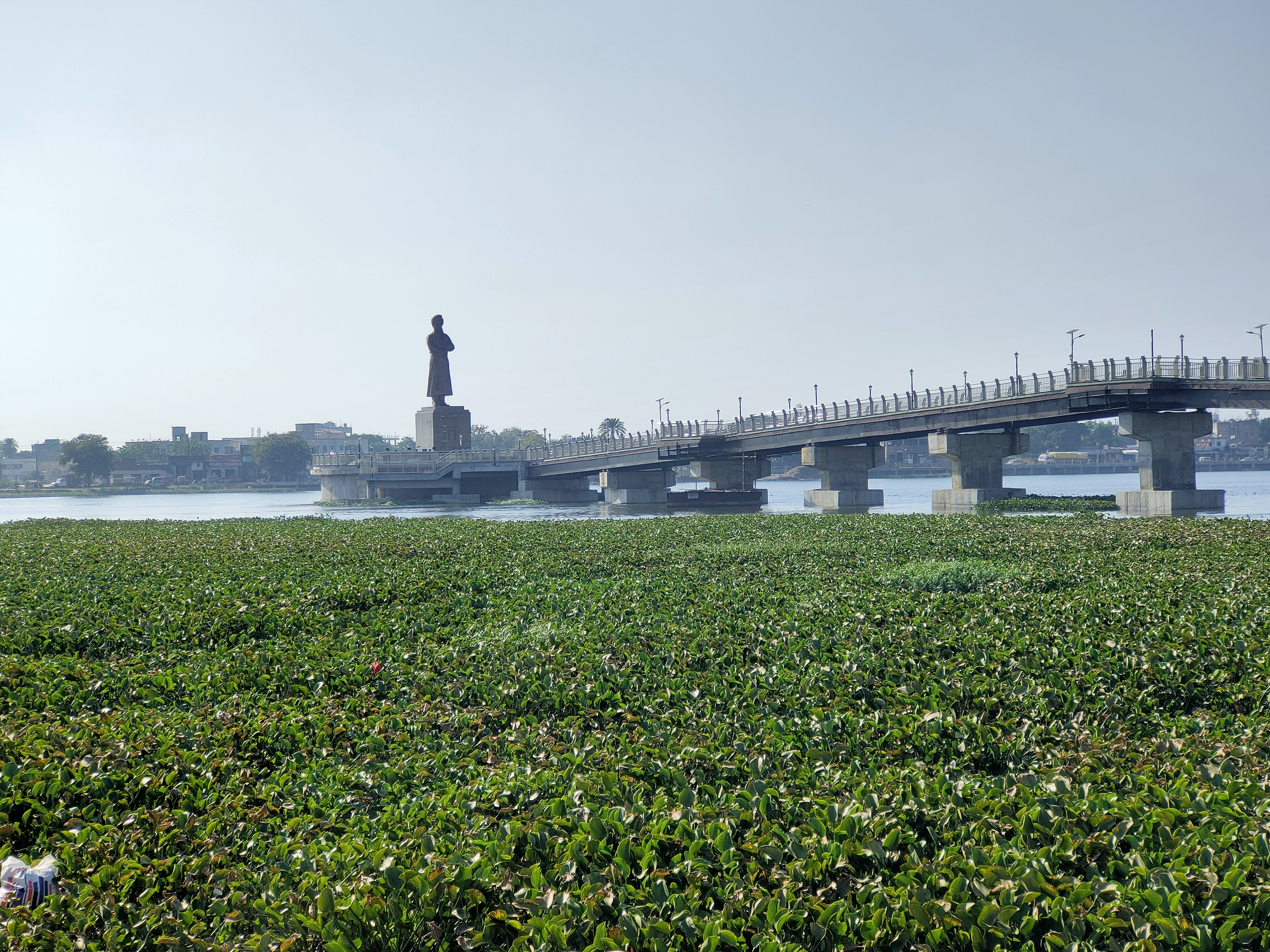 Ranchi Lake covered with water hyacinths