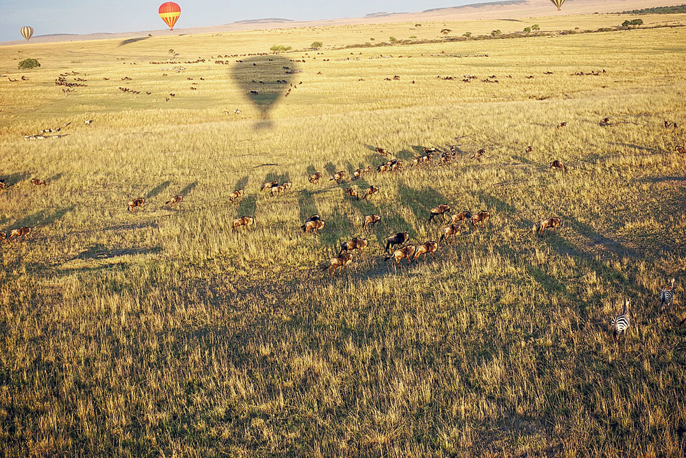 Our hot air balloon swooped down for a closer view of the zebras, gazelles and wildebeests.
