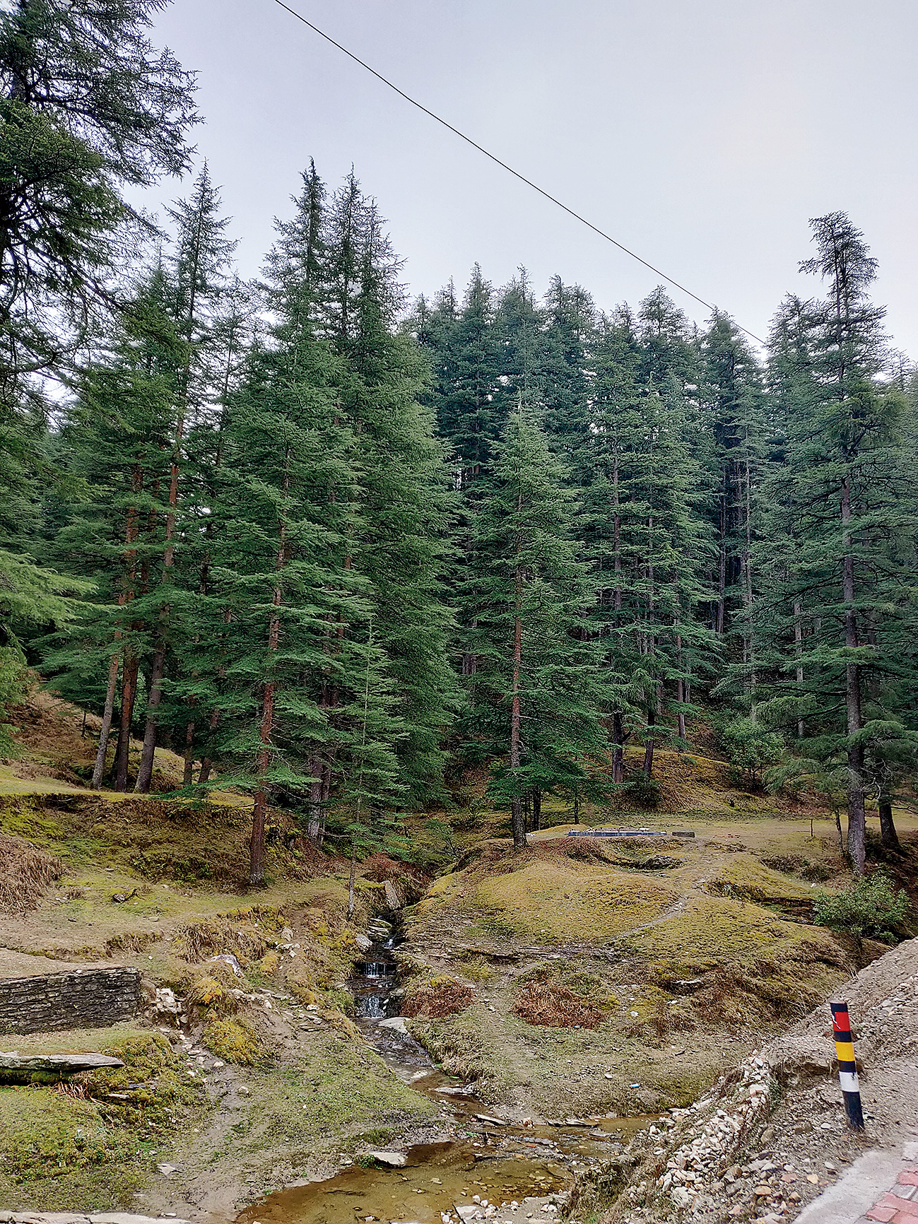 A small stream and a line of deodar trees made for a pretty sight outside the Dandeshwar temple