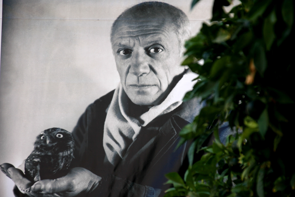 Black and white poster with Pablo Picasso portrait and green tree at Picasso exhibition hall, Dubrovnik, Croatia.