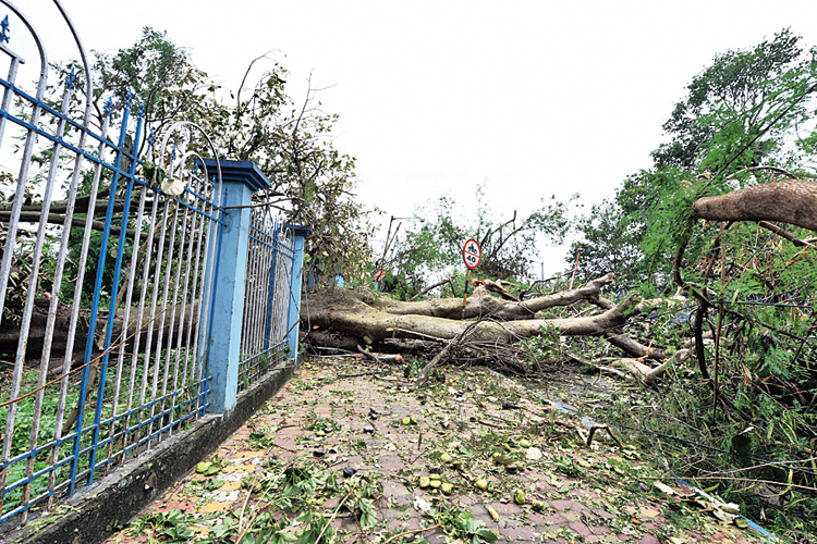 A tree that crashed to the ground at Rabindra Sarobar in Calcutta