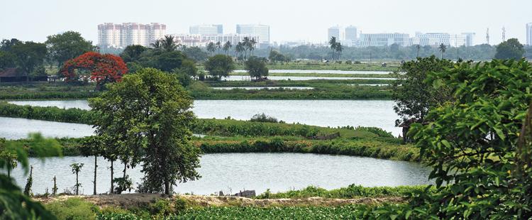 The East Calcutta Wetlands