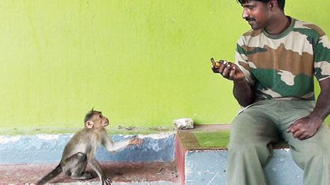 Monkeys call, extend palm to seek food